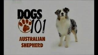 Порода собак Австралийская овчарка аусси(В этом видео рассказывается о породе собак Австралийская овчарка. Прочесть статью Вы можете посетив сайт..., 2016-01-26T16:39:20.000Z)