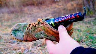 Cobra kämpft gegen polnischen Tüffelbüffel !!!