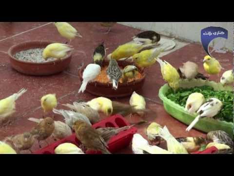 www.canary-planet.com