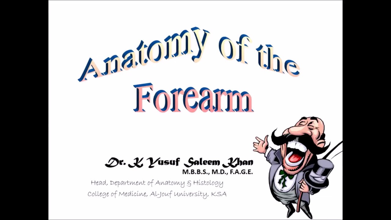 Anatomy Lecture on Forearm (Part-1) (Flexor compartment) - YouTube