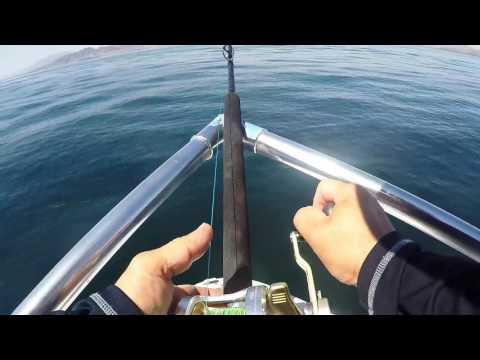 Yellowtail fishing in Gulf of California