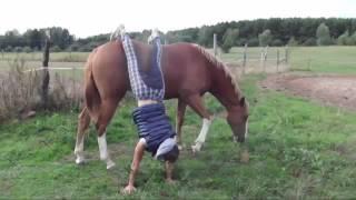 Zabawa z mlodym koniem