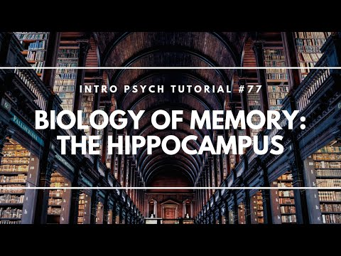 Biology of Memory: The Hippocampus (Intro Psych Tutorial #77)