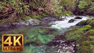 Enjoy a virtual nature walk along quinault loop trail in new 4k relax video from http://www.proartinc.net and http://www.beautifulwashington.com lift up yo...