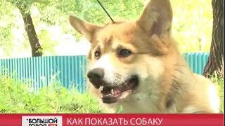 Как показать собаку. Большой город. live. 12/09/2018. GuberniaTV