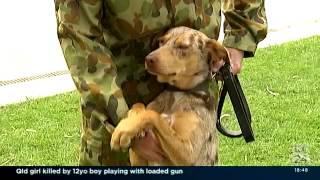 Australian Military Dogs - 26 Feb 2014
