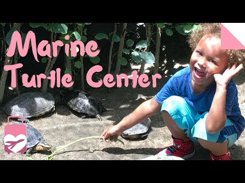 Bali Turtle Conservation and Education Center | SNEAK PEEK