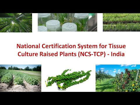 National Certification System For Tissue Culture Raised Plants (NCS-TCP) - First In World