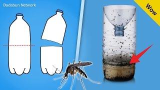 Mira el truco para eliminar los mosquitos con una botella de plástico thumbnail