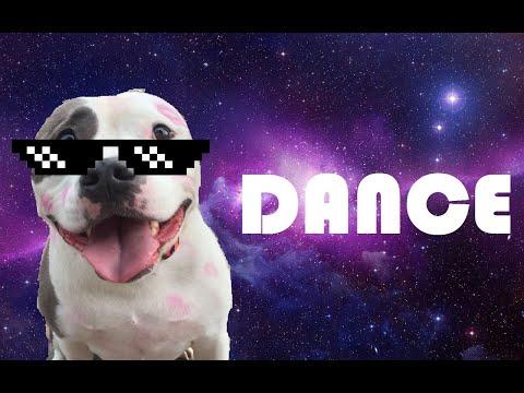 Funny DOG dancing ✔✔