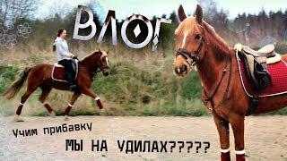 ВЛОГ: МЫ НА УДИЛАХ?? | Учим прибавку | Обычный день на конюшне