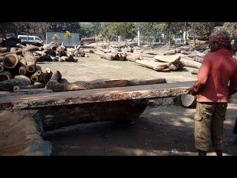 Big, Thin and Solid Wood Pcs Cutting in Saw Mill of Asia/Asian Rural Saw Mill Blade Wood Cutting