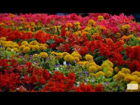 Lalbagh flower show | Botanical garden Bangalore