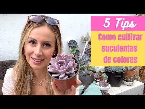 👩🏼🌾 5 Tips para cultivar suculentas de colores