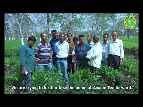 Organic practices by small tea growers - Tea Board of India