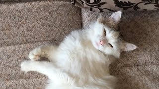 Кошка, которая загуляла и ночью спать не даёт