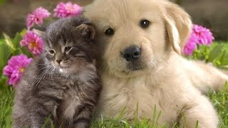 Домашние животные после смерти|Можно ли притянуть|найти любимца в новом теле