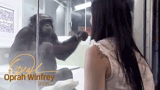 Kanzi the Ape Who Has Conversations with Humans | The Oprah Winfrey Show | Oprah Winfrey Network