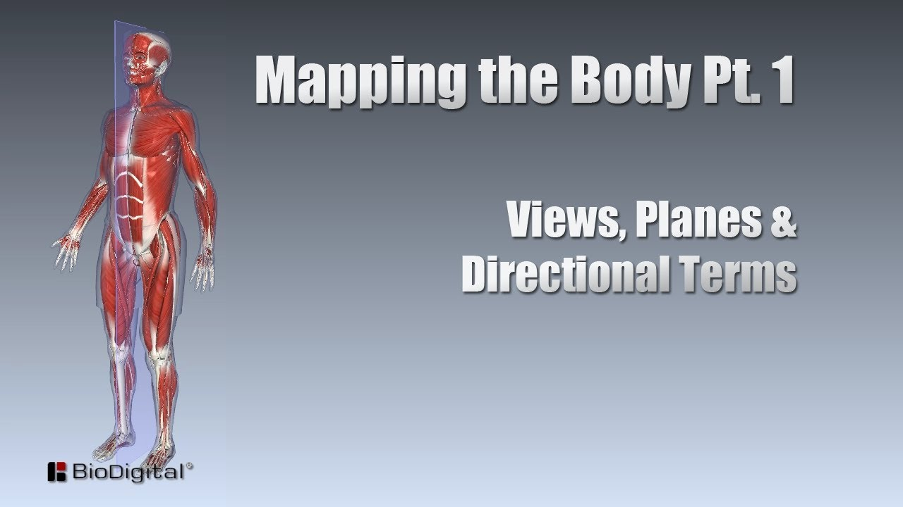Mapping the Body Pt. 1: Views, Planes and Directional Terms - YouTube