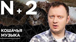 Андрей Коняев объясняет, зачем создают музыку для кошек // N+2