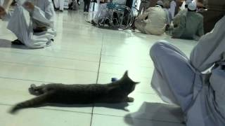 Cute Cat In MASJID E NABVI Shareef