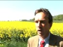 Rapeseed Production is Blooming in Germany