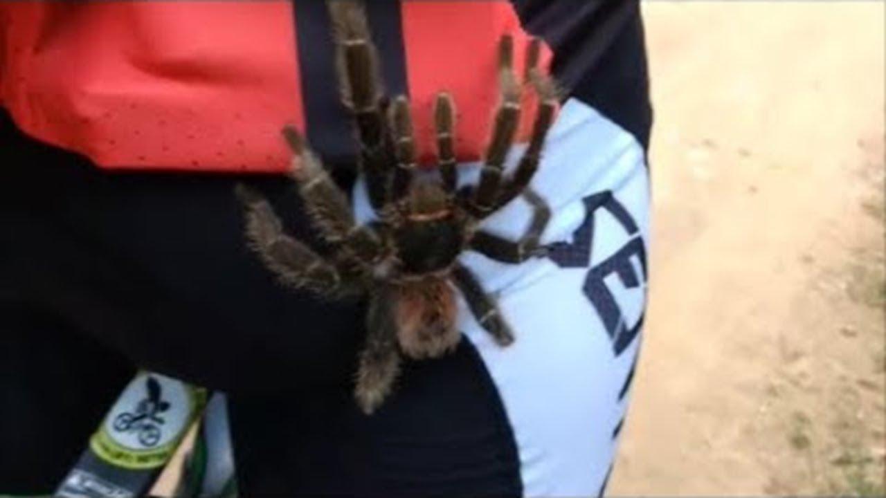 Giant Tarantula Climbs Up Cyclists Leg Viralhog
