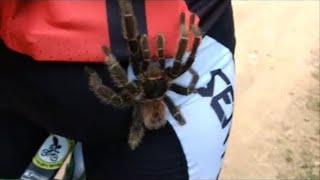 オンリーブラジルと信じたい。サイクリング中にタランチュラが足に這い上がってきた件(蜘蛛出演中)