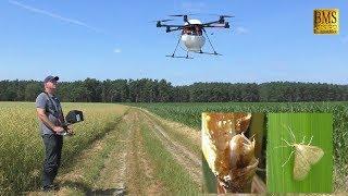 Agrar Drohne Schädlinge bekämpfen mit Schlupfwespen (Trichogramma) biologische Schädlingsbekämpfung