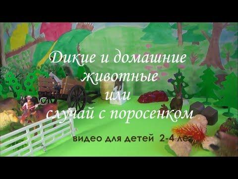 домашние фото видео