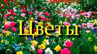 Обучающий мультфильм про цветы Развивающий мультик Метод Домана