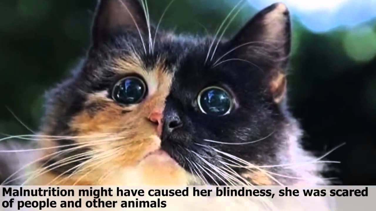 blinde katze jasmin verzaubert mit ihren augen youtube. Black Bedroom Furniture Sets. Home Design Ideas