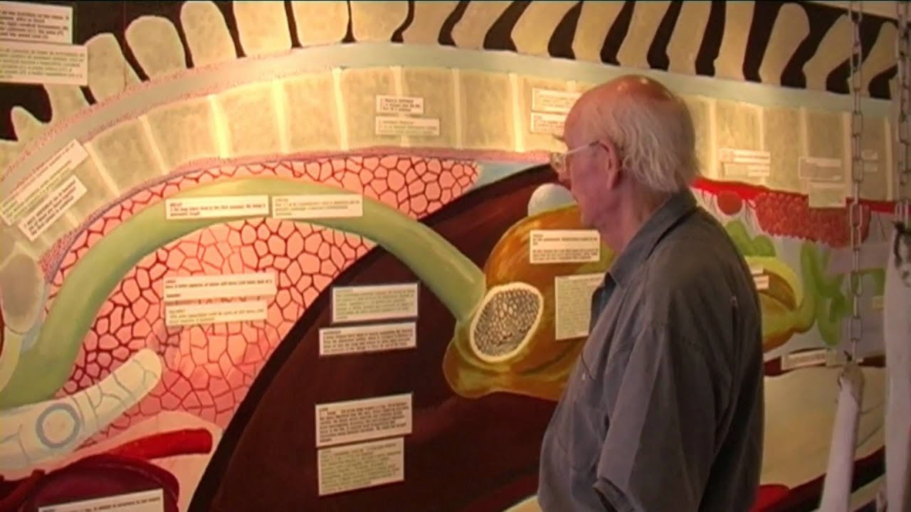 Professor Malcolm Clarke - discusses the anatomy of sperm whales ...