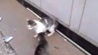 Кровавая битва кошек