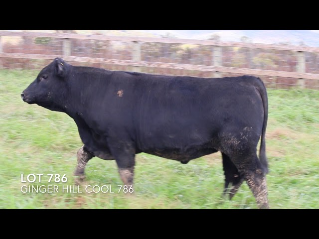 Ginger Hill Angus Lot 786