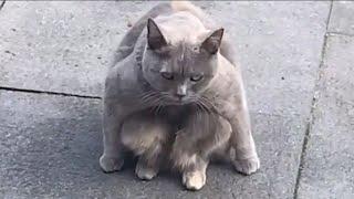 CAT MEMES COMPILATION V03