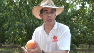 Peach Picks for South Carolina - #18 CaroTiger - Everything About Peaches