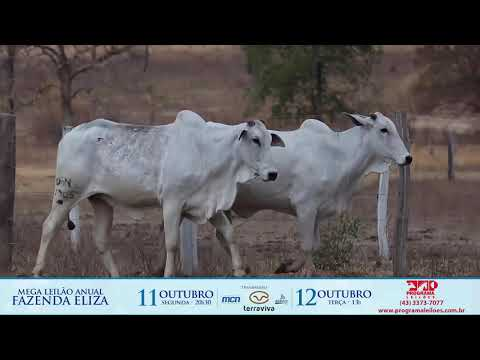 LOTE 183