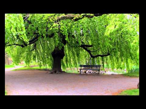 Victorian Public Gardens in Halifax 3D slideshow (Full Movie)