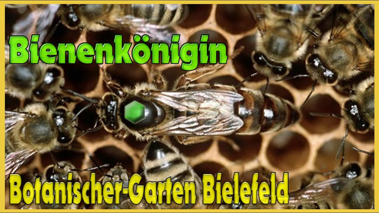 bienenstock botanischer garten bielefeld tanz um die bienenk nigin youtube. Black Bedroom Furniture Sets. Home Design Ideas