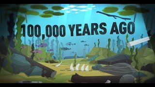 Prehistoric fossils and drowned landscapes in the Belgian part of the North Sea (7 min)