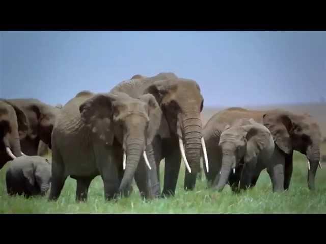 Tanzania Tourism - Unravel Travel TV