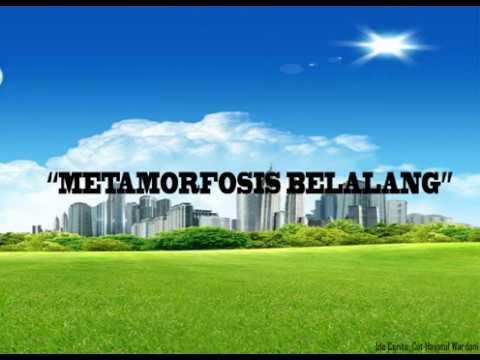metamorfosis belalang 2d
