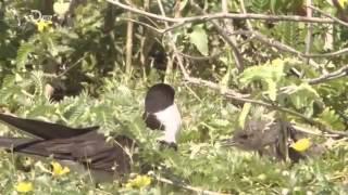 Paradies auf Erden - Naturwunder Hawaii - Teil 3