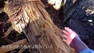 鷹ノ巣山登山~稲村岩尾根~