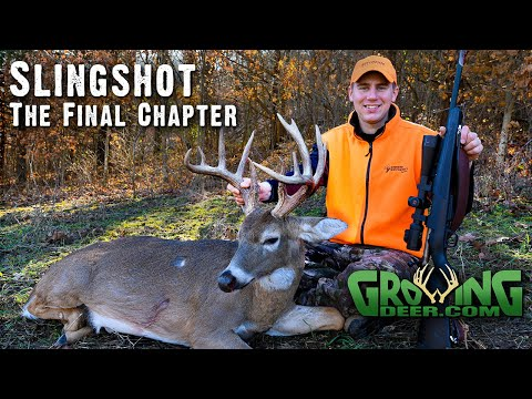 #1 Hit List Buck Is Down! Self-filming, Grunt Calling Brings Him In Range! (Deer Hunting 2019)