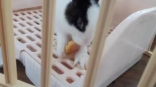 왕자두 먹어 치우는 토끼 쭈쭈