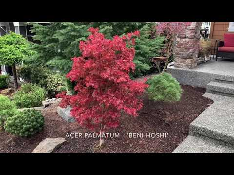 Japanese Maples - More Spring Color With Labels