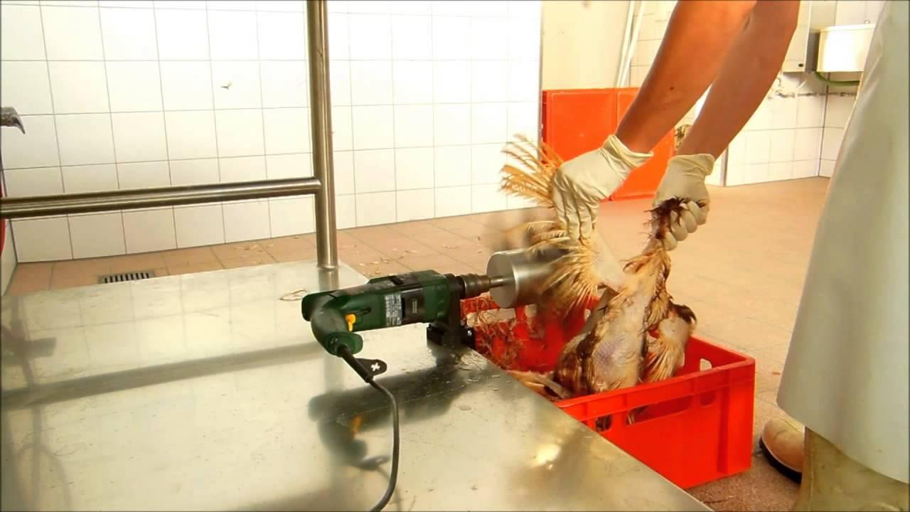 Hühner Rupfen
