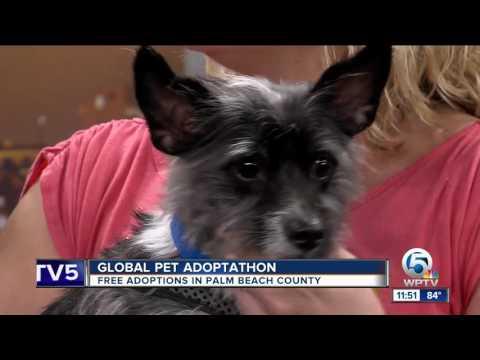 Global Pet Adoptathon: Free adoptions in Palm Beach County
